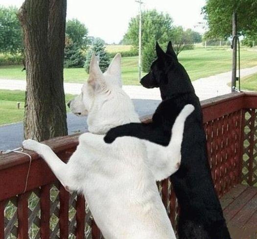 仲良く方を組む2匹の犬