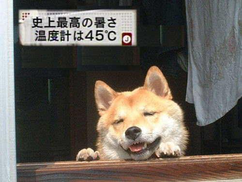 暑そうな犬