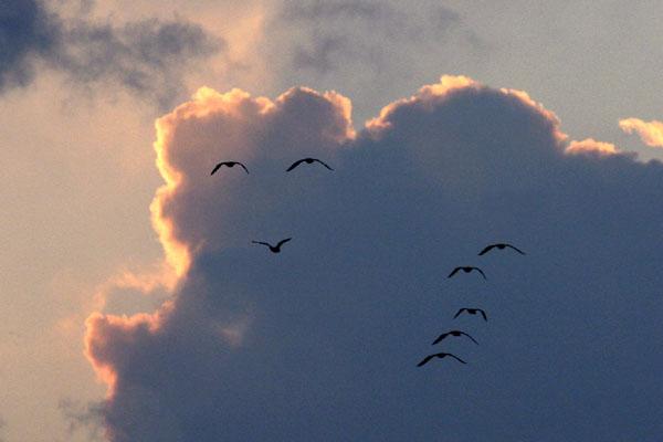 鳥たちが笑っている画像